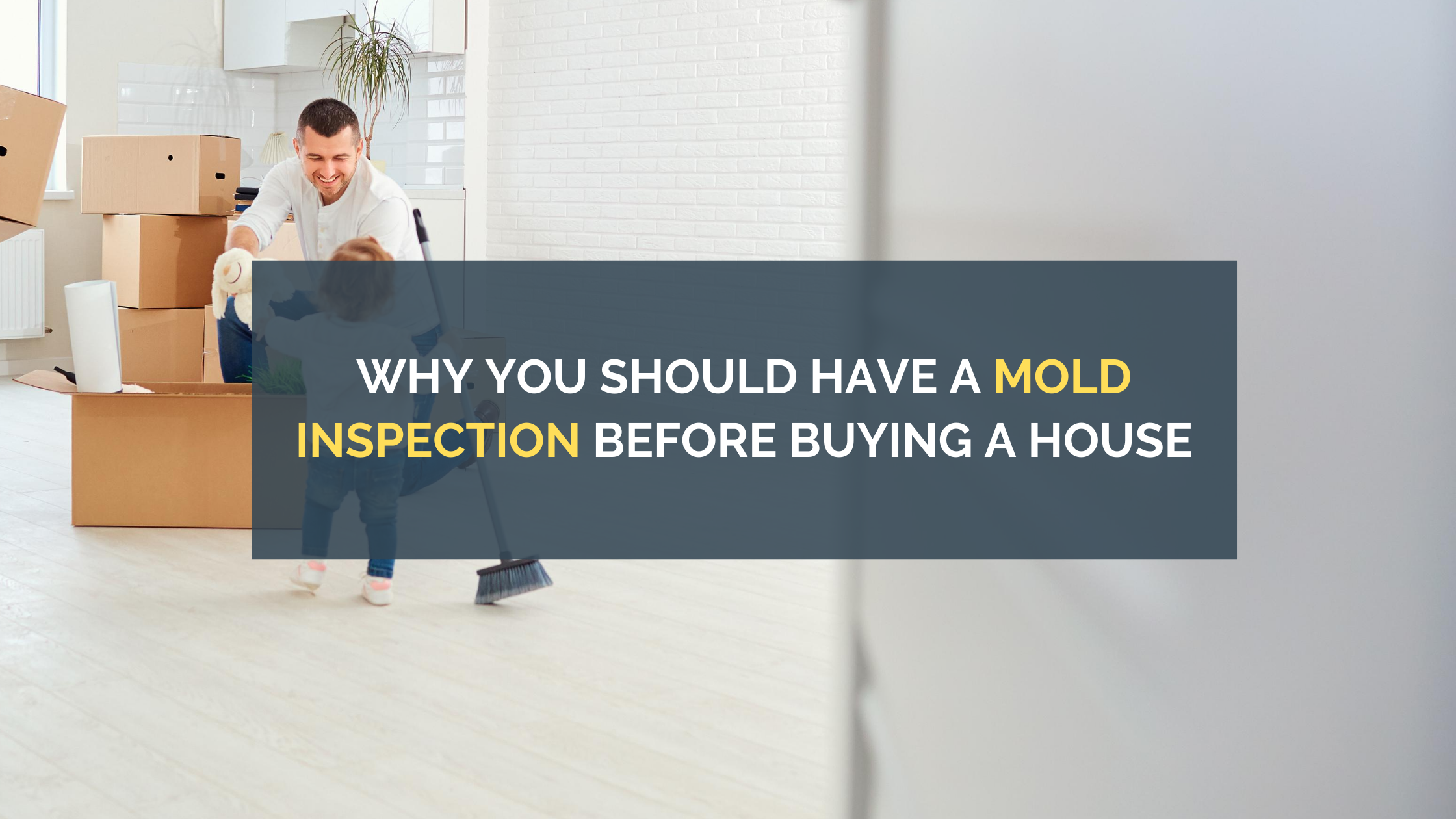 Why You Should Have a Mold Inspection Before Buying a House
