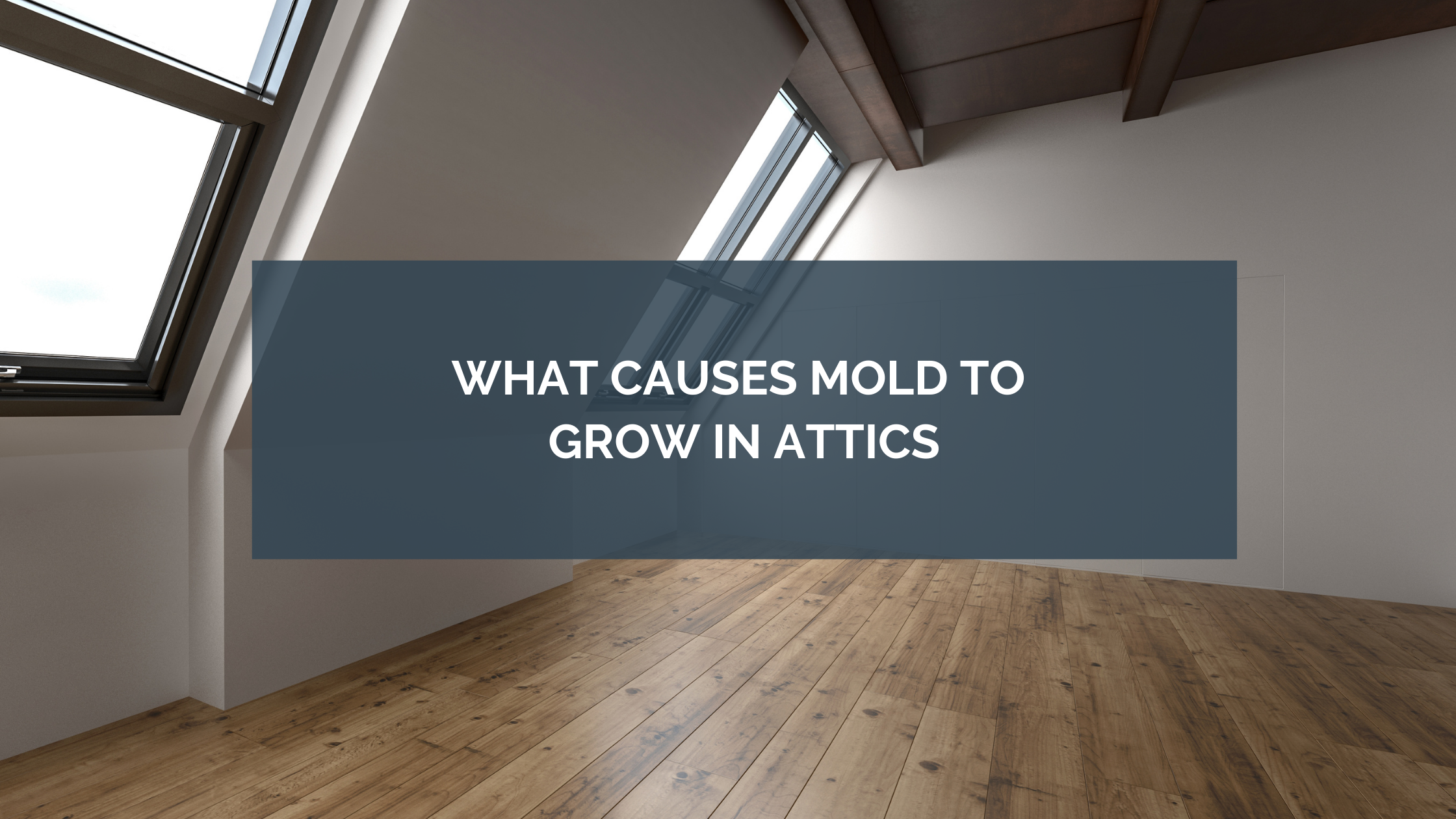 What Causes Mold to Grow in Attics